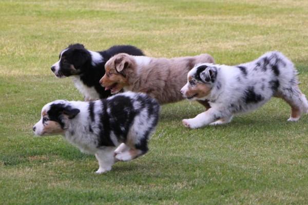 Dulyn's Pups (1)