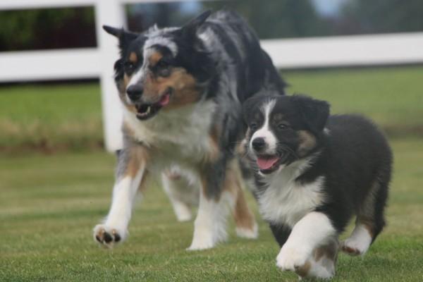 Dulyn's Pups (2)