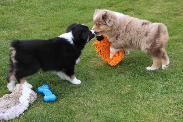 Dulyn's Pups (4)